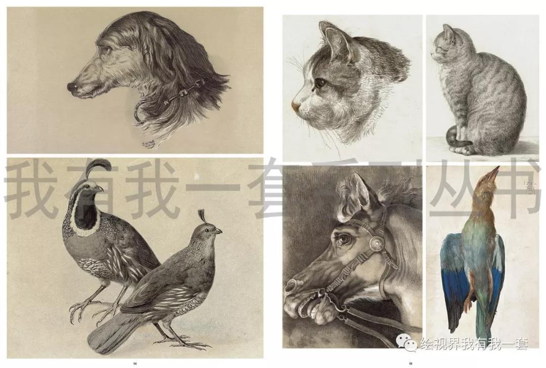 2018我有我一套精微素描 朱乾盛孙建长期头像静物动物正版书7