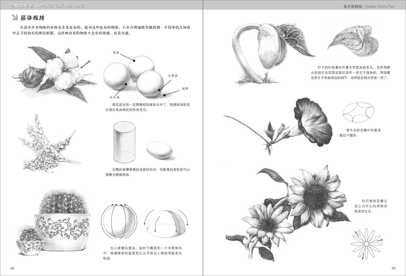 素描铅笔画61 花卉植物篇-百道网
